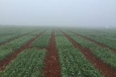 01-niebla-en-enero