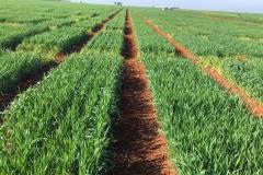 04-corte-de-pasillos-con-herbicida