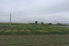 22-proyecto-agrisost